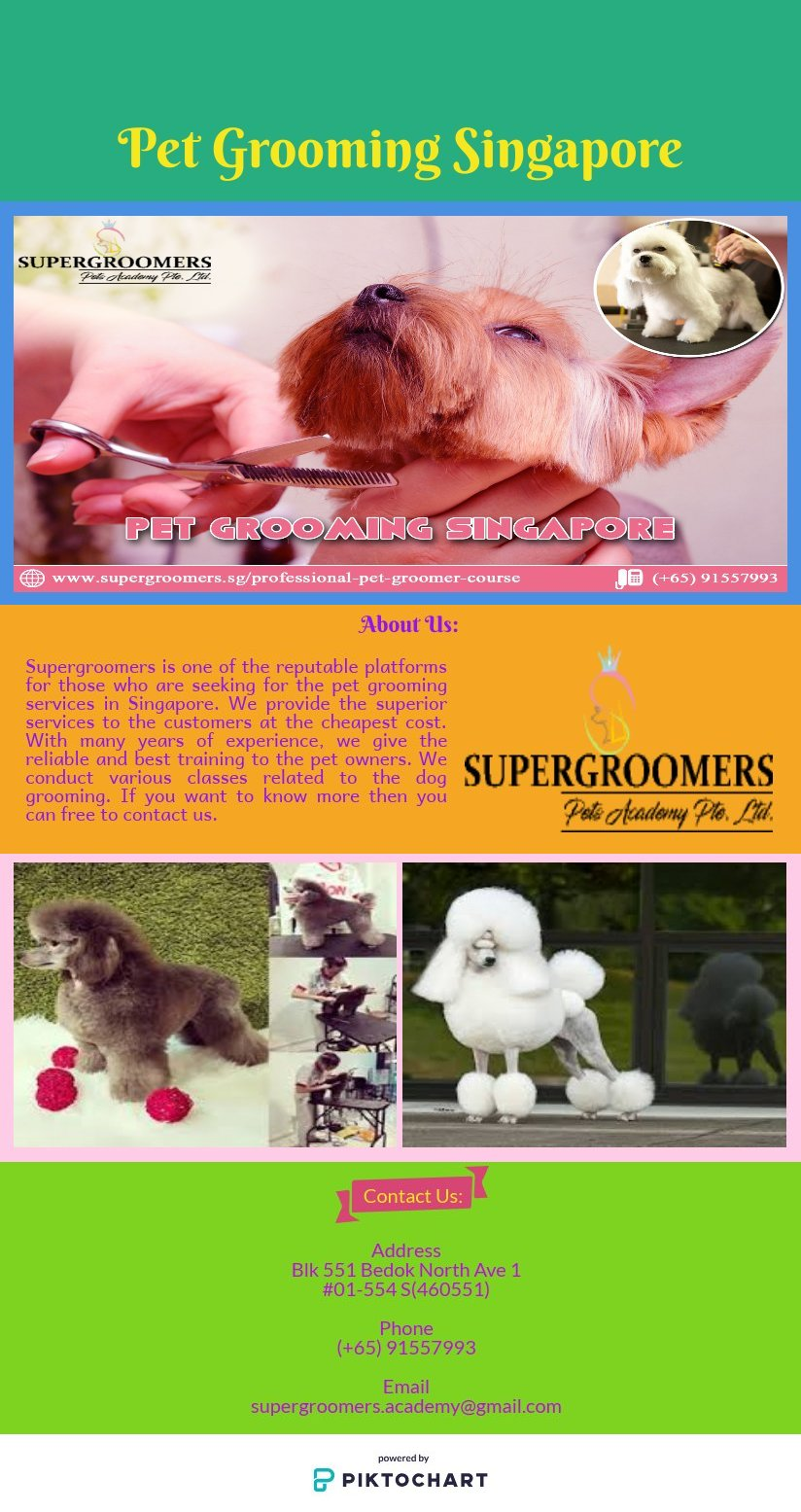 Searching for Pet Grooming Center in Singapore